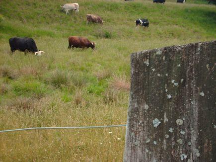 bowsandpost.jpg