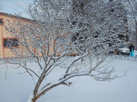 snow-shrub.jpg