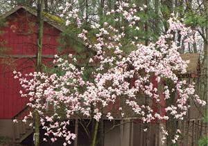 flowers by cabin