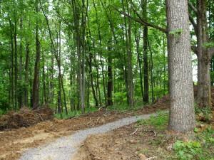 path good one