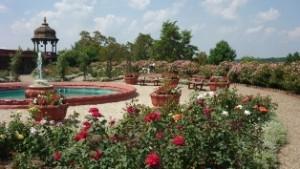 Prabhupada's Palace beautiful Rose Garden