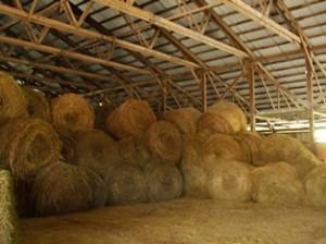 Hay's In!
