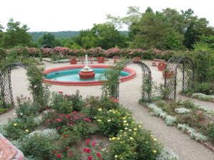 Palace Rose Garden