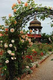 rose trellis