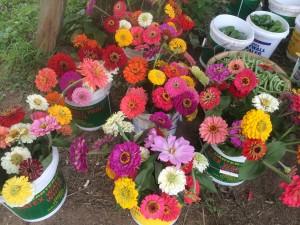 New Vrindaban Garden Flowers