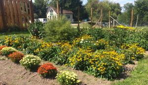 New Vrindaban teaching garden fall 2014