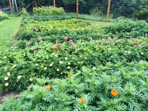 New Vrindaban Flower Garden 2014 Vidya