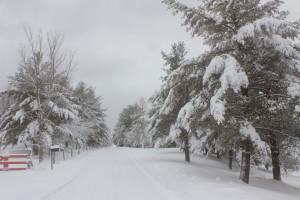 Gaura Purnima's serene snow scene.