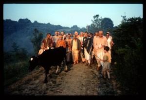 Prabhupada Reunited With ISKCON's Original Cow Kaliya - New Vrindaban 1976