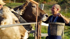 ISKCON New Vrindaban Nitaicandra Cows 2015 ECO-Vrindaban