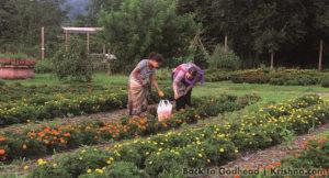 ISKCON New Vrindaban Flower Garden