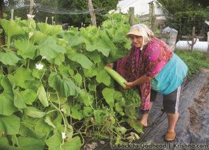 ISKCON New Vrindaban Garden Vidya Dasi