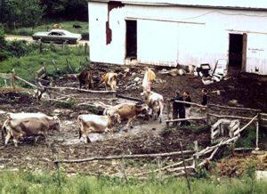 ISKCON New Vrindaban Bahulaban Barn 1970s
