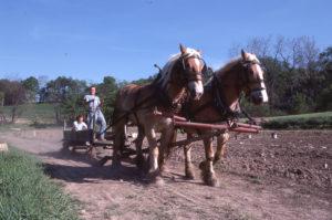 Advaitacarya New Vrindaban ISKCON Bahulaban Horses