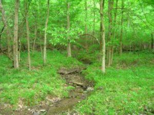 ISKCON New Vrindaban forest