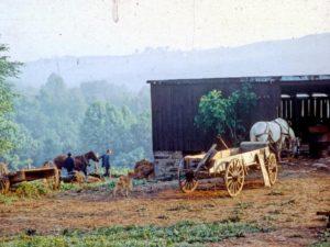 New Vrindaban ISKCON Horses Simple Living